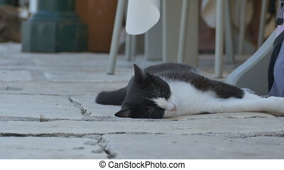Cat Sleeping near Table
