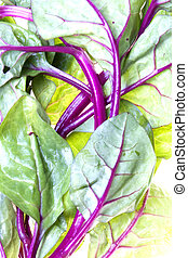 Emperor Vegetable Isolated - Isolated image of emperor...