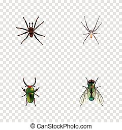 Realistic Spider, Housefly, Arachnid And Other Vector Elements. Set Of Insect Realistic Symbols Also Includes Green, Jewel, Tarantula Objects.