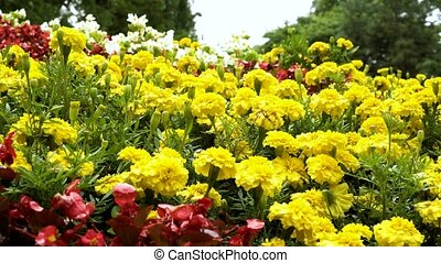 Background of motley, bright garden flowers. Move the camera...