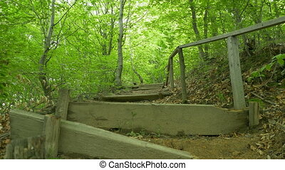 Wooden Stairs in the Woods - Broken wood stairs on a steep...