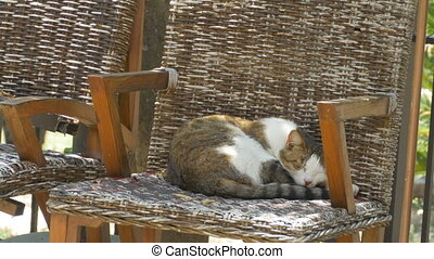 Cat Sleeping in Chair - Tabby cat is slepping in a stool...