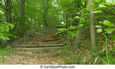 Broken Wooden Stairs in Forest - Stairs in a wooden forest...