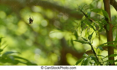 Spider and Ants in Forest - Insect fauna view with ants and...