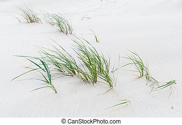 Green grass on the sandy beach of the Baltic Sea
