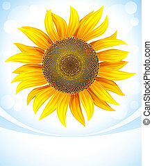 yellow flower of sunflower vector illustration. Graduent...