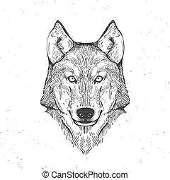wolf head on white, vintage illustration