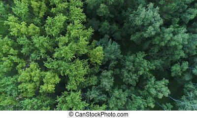 The drone is flying over the forest. View from above.4k UHD...