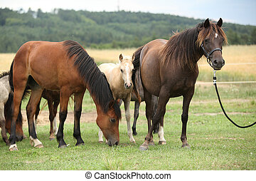 Horses together on pasturage - Beautiful horses together on...