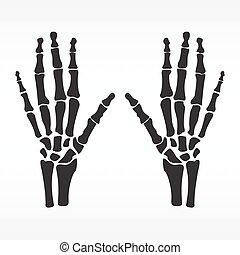 Human hands bones - Vector illustration hands bones....