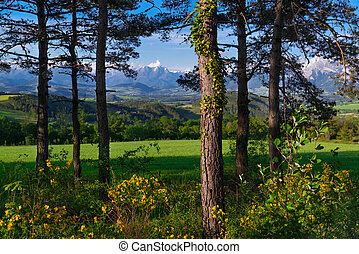 Grassy meadow with pines in the mountain valley