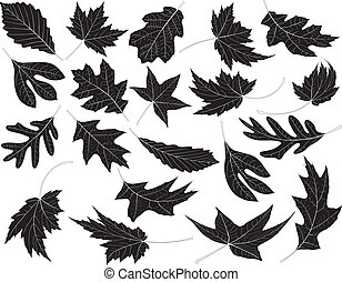 Leaves - Twenty Black and White Leaves