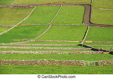 Farm fields with stone walls in the Terceira island in...
