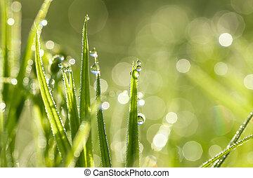 夏, 草, 牧草地, 日光, 露, 緑, 低下