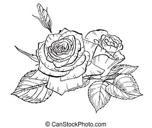 Two hand drawn rose flowers in contour. Botanical vector illustration