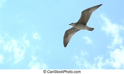 gull flies in the sky.
