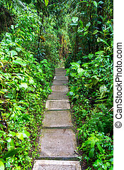 Nature Path in Colombia - Path through a cloud forest near...
