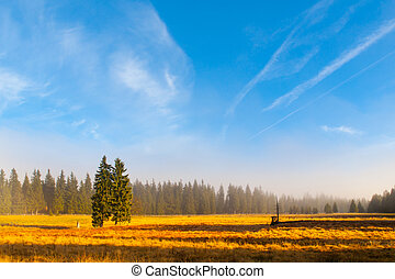 Autumn landscape sunny and hazy morning with two spruces,...