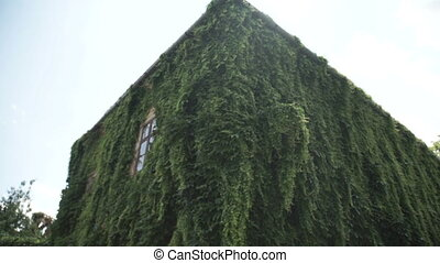 Young smiling woman enjoying a sunny summer day looking at house brick facade overgrown with creeping plants