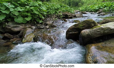 Beautiful river in Carpathian mountains