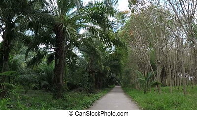 Front View Of Road Through Tropical Forest Action Camera POV...