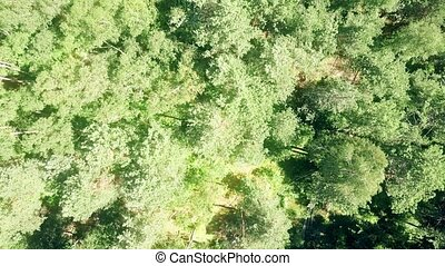 Aerial top down view of European forest trees on a sunny...
