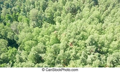 Aerial down view of European forest trees on a sunny summer...
