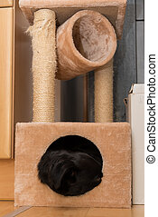 Dog in cuddly cave of a cat tree - Black dog is relaxing in...