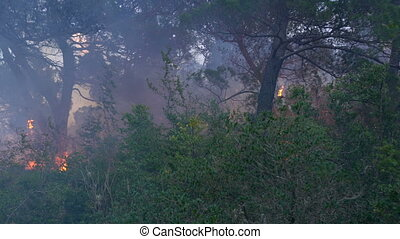 Fire storm in the forest at dusk