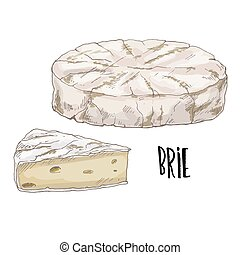 Brie. Full color cheese illustration, vector hand drawn...