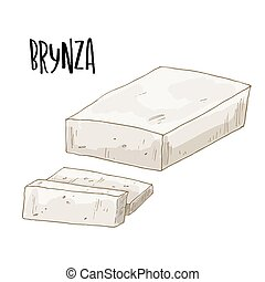 Full color cheese illustration, vector hand drawn - Brynza....