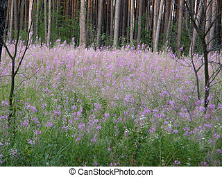 meadows and beautiful trees in the spring. - Green meadows...