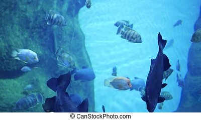 A large number of fish swim around the reefs. Scuba diving...
