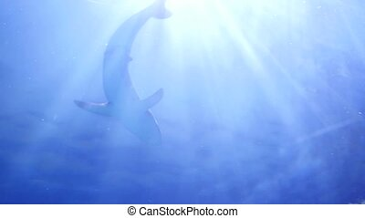 Large sharks swimming around the reef. Scuba diving masks....