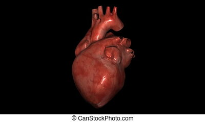 Realistic Heart - 3d render heart animation.
