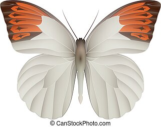 Great orange tip butterfly isolated on a white background....