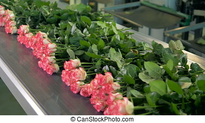 Bound flowers on conveyor at flower factory. - Flowers being...