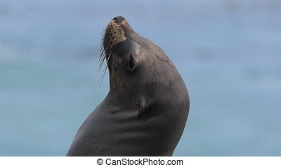 California Sea Lion Enjoying the Sun - California Sea Lion...