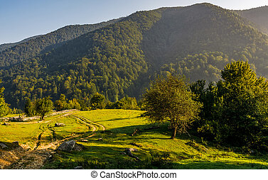 countryside road in mountains at sunrise. orchard behind the...