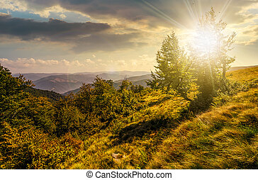 forest on a mountain slope at sunset - forest around the...