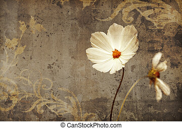 cosmea - An image of a nice cosmea with space for text