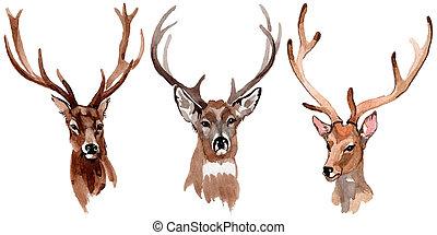 スタイル, 隔離された, 水彩画, トナカイ, 動物, 野生
