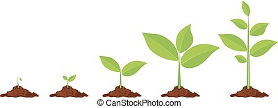 Phases plant growing.