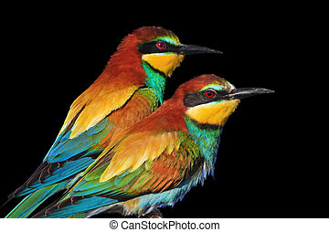couple of wild exotic birds are isolated on black