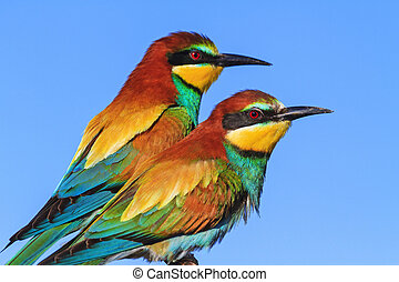 couple of wild exotic birds