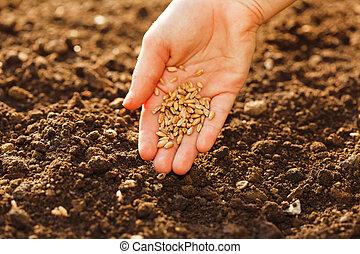 milho, semear, mão