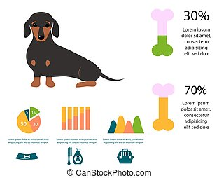 Dachshund dog playing infographic vector elements set flat...