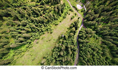 Aerial shot of green forest