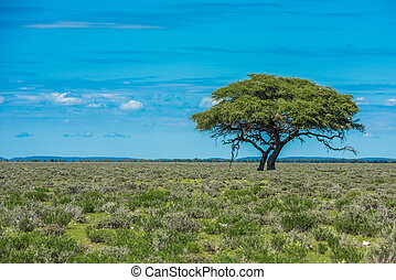 Tree in savannah, classic african landscape
