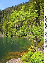 Black Lake, Czech republic - Black lake is the largest lake...